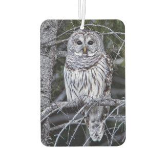 Barred Owl Car Air Freshener