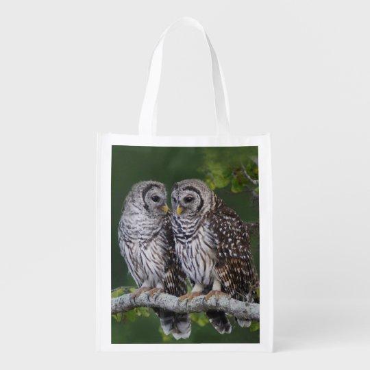 Barred Owl Fledglings - Reusable Grocery Bag