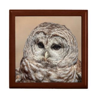 Barred Owl Gift Box