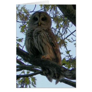 Barred Owl (Hoot Owl) Card