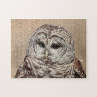 Barred Owl in flight Puzzles