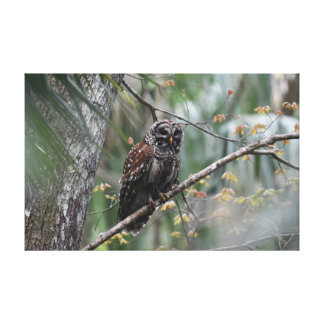 Barred Owl in Old Growth Hammock Canvas Print