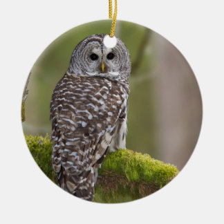 Barred Owl in the old growth Round Ceramic Ornament