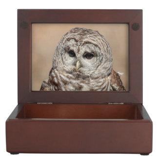 Barred Owl Keepsake Box
