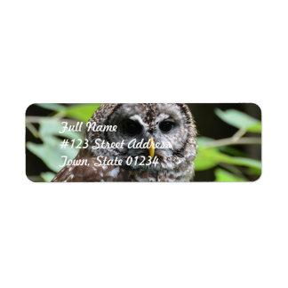 Barred Owl Return Address Label