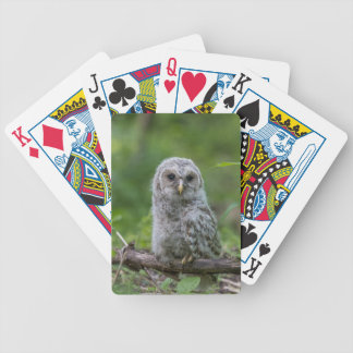 Barred Owl owlet Bicycle Playing Cards