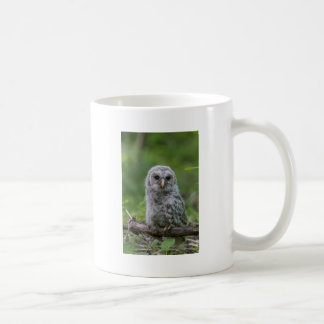 Barred Owl owlet Coffee Mug