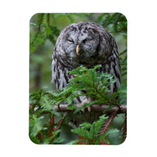 Barred Owl Scratching Rectangular Photo Magnet