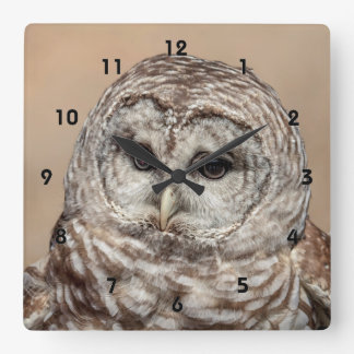 Barred Owl Square Wall Clock