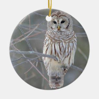Barred Owl Strix Varia Round Ceramic Ornament