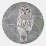 Barred Owl Strix Varia Round Sticker