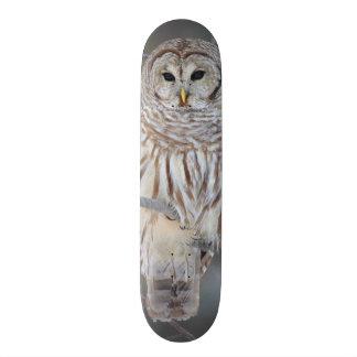 Barred Owl Strix Varia Skate Board Deck