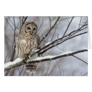 Barred Owl with a light snowfall Card
