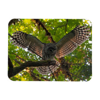 Barred Owl with Wings Outstretched Rectangular Photo Magnet
