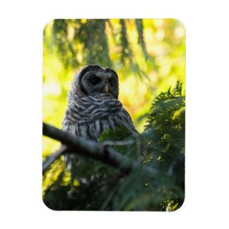 Barred Owlet Rectangular Photo Magnet