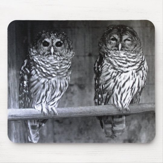 Barred Owls Mouse Pad