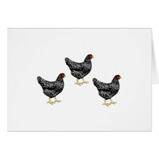 Barred Plymouth Rock Heritage Breed Laying Hens Card