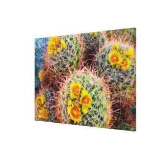 Barrel cactus close up, California Canvas Print