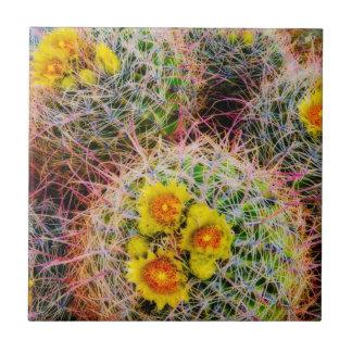 Barrel cactus close up, California Ceramic Tiles