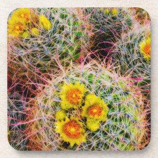 Barrel cactus close up, California Coasters