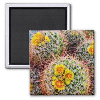 Barrel cactus close up, California Square Magnet