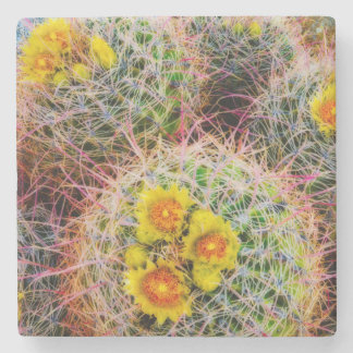 Barrel cactus close up, California Stone Coaster
