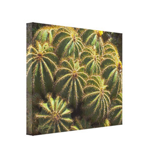 Barrel Cactus - Wrapped canvas print