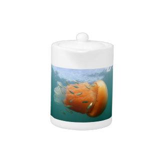 Barrel Jellyfish Swims With Mackerel
