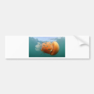 Barrel Jellyfish Swims With Mackerel Bumper Sticker