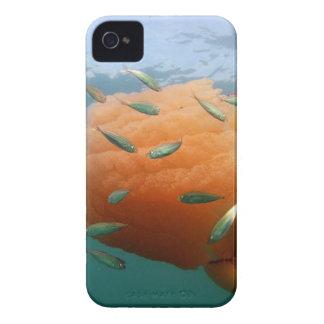 Barrel Jellyfish Swims With Mackerel iPhone 4 Case