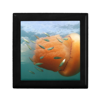 Barrel Jellyfish Swims With Mackerel Keepsake Box