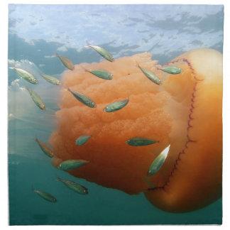 Barrel Jellyfish Swims With Mackerel Napkin