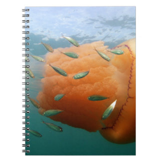 Barrel Jellyfish Swims With Mackerel Notebook