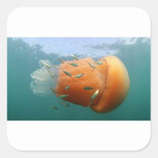 Barrel Jellyfish Swims With Mackerel Square Sticker