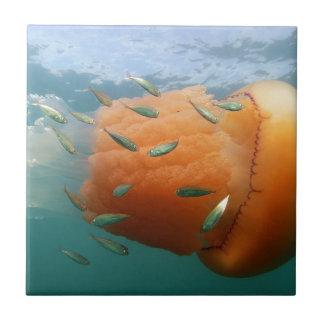 Barrel Jellyfish Swims With Mackerel Tile