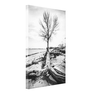 Barren Tree and Driftwood Canvas Print