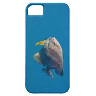 Barrier Reef fish Case For The iPhone 5