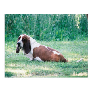 Bart the Basset Hound Postcard 3