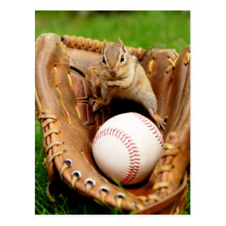 Baseball Fan Chipmunk Postcard
