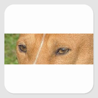 basenji eyes square sticker