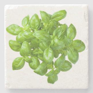 Basil Isolated on White Background Stone Coaster