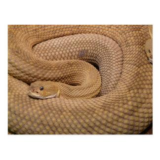 Basilisk Rattlesnake Postcard