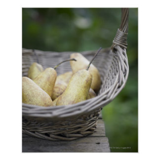 Basket of freshly picked pears. poster