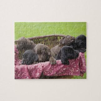 Basket of labrador retriever puppies puzzle