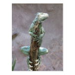 Basking Iguana Postcard
