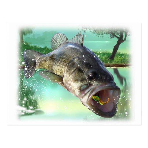 bass fish green postcard