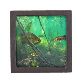 Bass Premium Jewelry Box