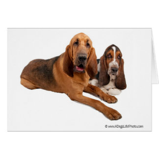 Basset and Bloodhound Buddies Card