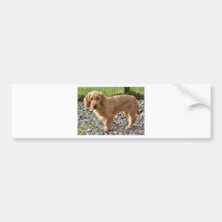 Basset Fauve de Bretagne Dog Bumper Sticker