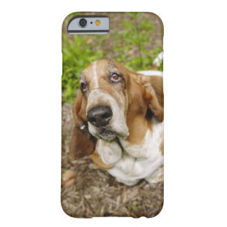 Basset Hound 2 Barely There iPhone 6 Case